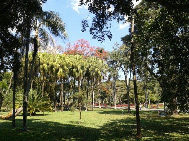 Botanical Garden, São Paulo