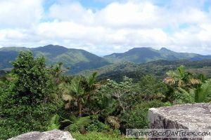 Toro Negro Forest Reserve | Orocovis