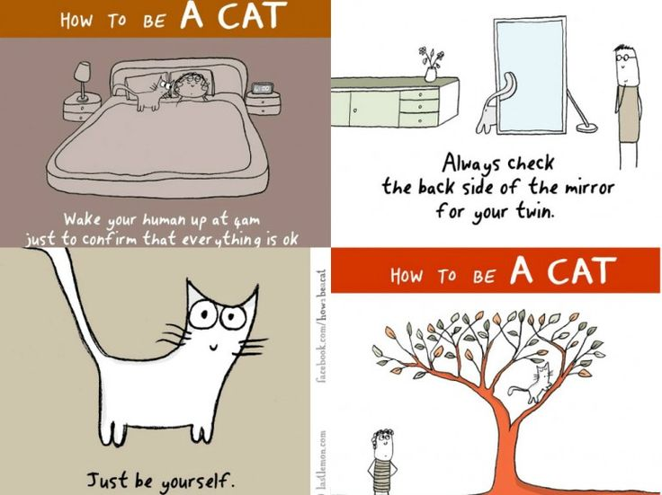 Discover the Project: How to Be a Cat