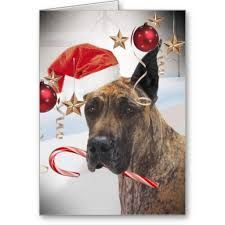 Giant Dog Breeds Christmas Outfits
