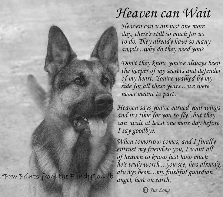 Heaven Can Wait Dog Rescue