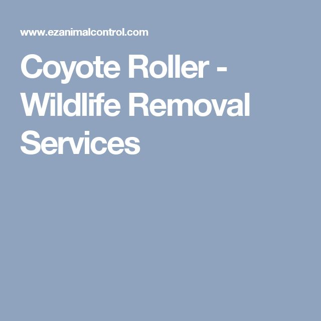Coyote Roller - Wildlife Removal Services