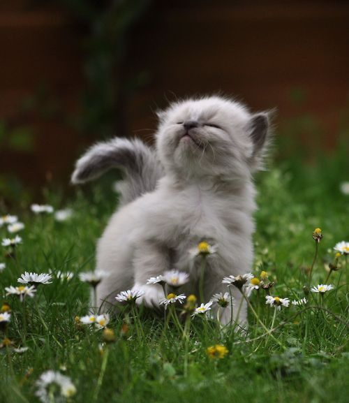 Kitty likes walking in the grass