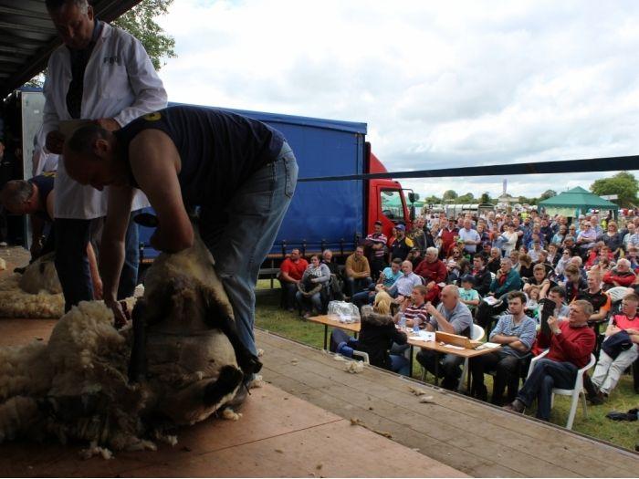 Sheep Shearing Trials at Tullamore Show & AIB National Livestock Show 2015