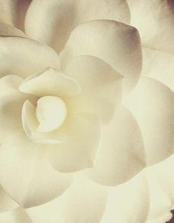 Ah, Gardenias...: