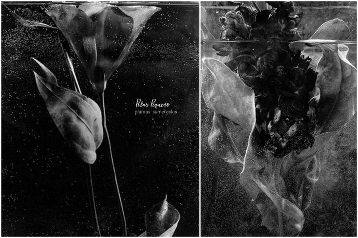 Pilar Pequeño – 'Submerged Plants'