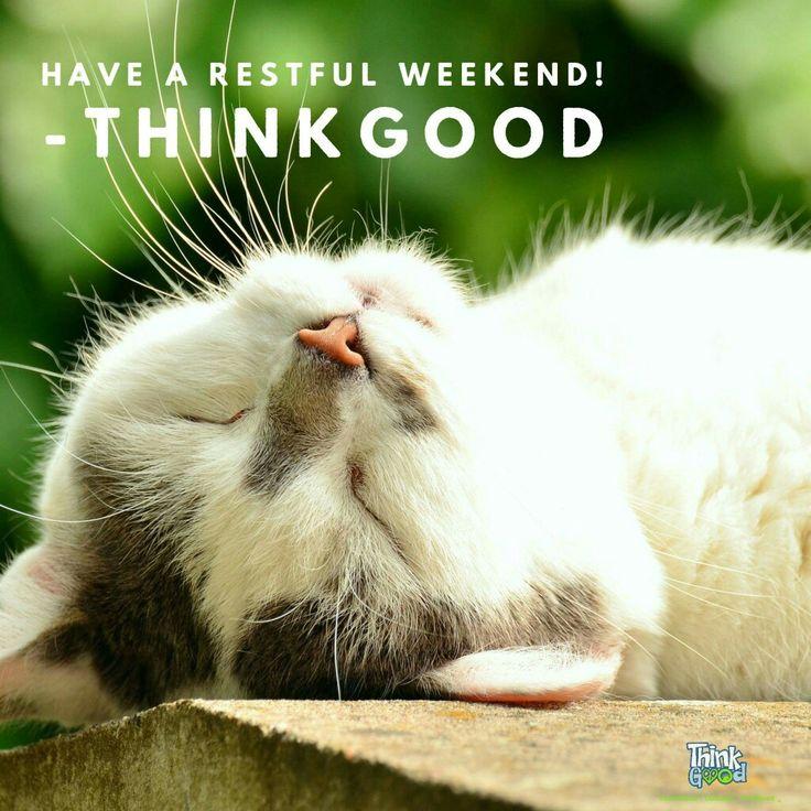 Bildergebnis für happy weekend cat