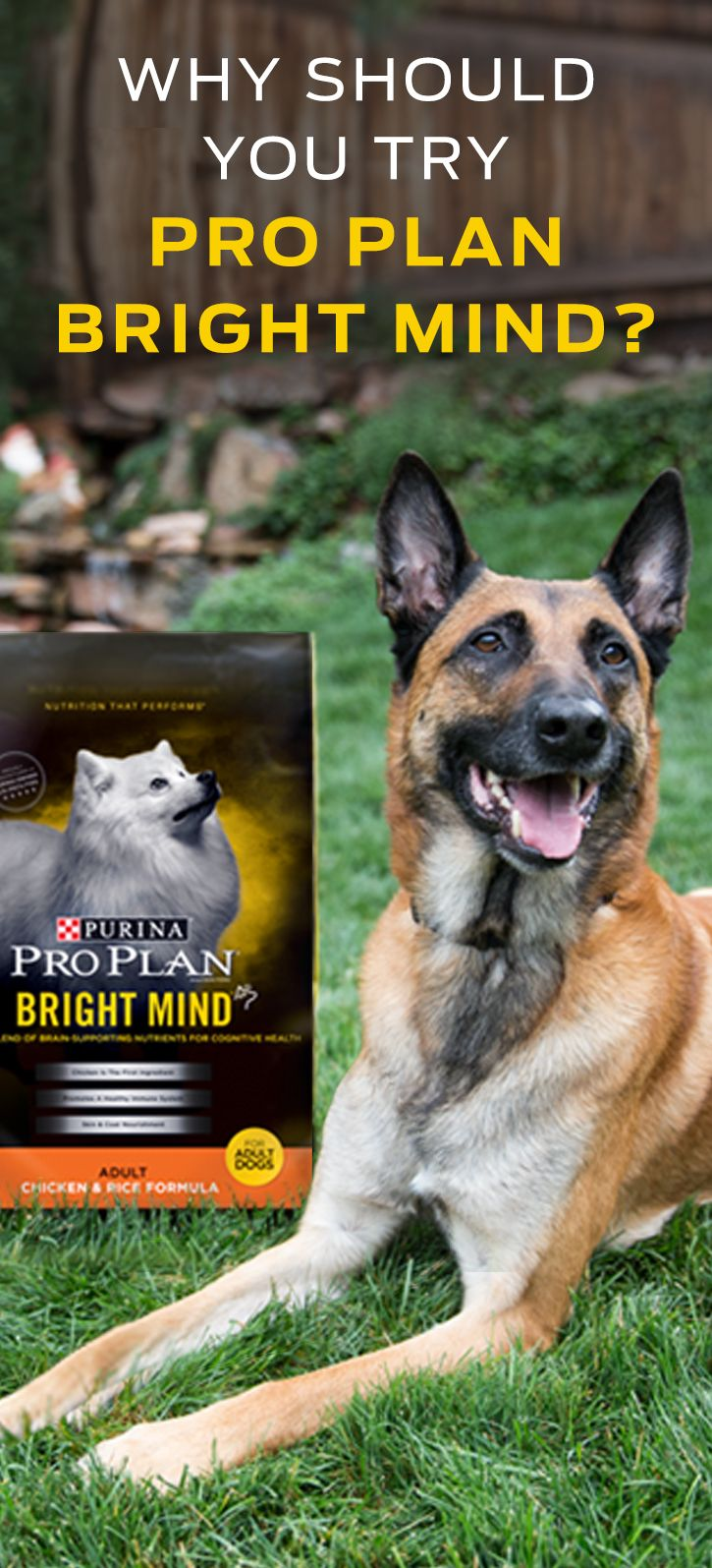Purina Pro Plan Bright Mind Adult is specially formulated to nourish your dog's mind throughout adulthood. Our Bright Mind Adult formulas contain a proprietary blend of nutrients including DHA & EPA, Antioxidants, B Vitamins, and Arginine to support a dog's cognitive health throughout adulthood. And if your dog is seven years or older, there are Bright Mind Adult 7+ formulas which promote mental sharpness and alertness in dogs seven and older. Try one of our Bright Mind Adult formulas today!