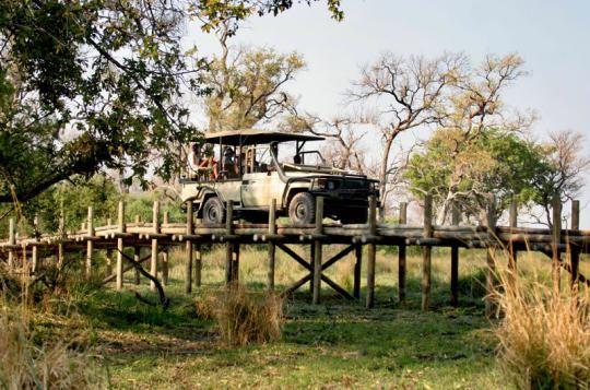 On a Game Drive at Pom Pom Camp (Okavango Delta, Botswana)