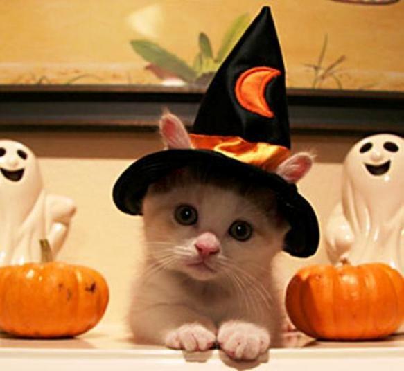 cute Halloween photo
