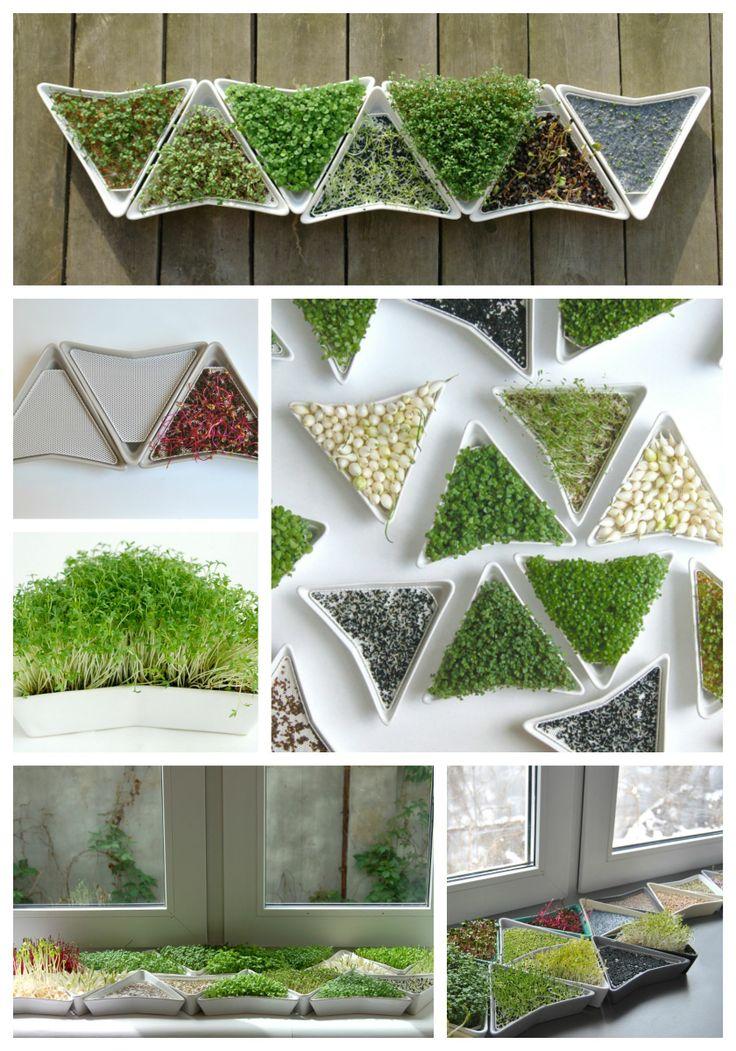Stwórz kiełki i inne zioła ze swojego domowego ogródka. :)