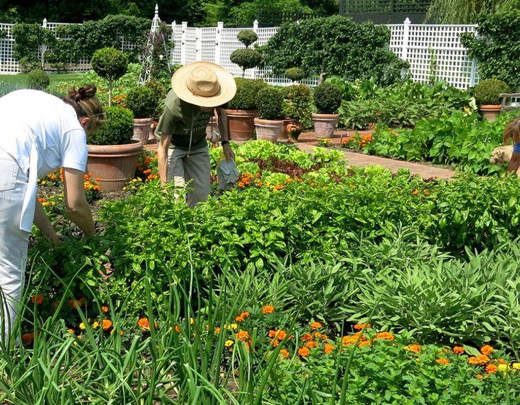 609 Best .the Vegetable U0026 Herb Garden. Images On Pinterest | Herb Garden,  Vegetables And Chicken Coops