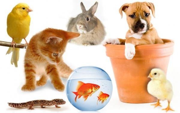 Social Pets - Pet Profiles ...