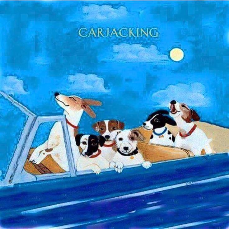 """car """"jack""""ing -think this is awesome! ❤️ #jrt #jackrussel"""