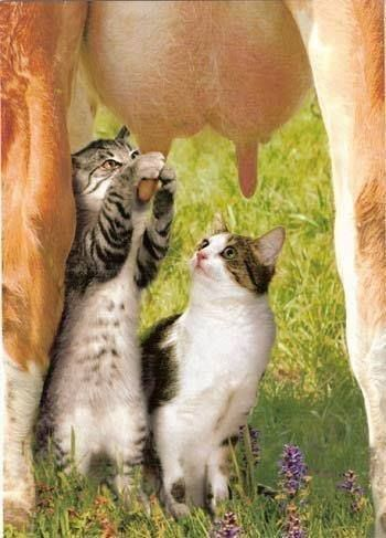 ♥HOT MILKIN' MAIDS, THIS IS REALLY DIFFERENT-----WE GET OURS OUT OF A GLASS BOTTLE, DELIVERED EACH MORNING BY THE LOCAL MILK MAN……..ccp