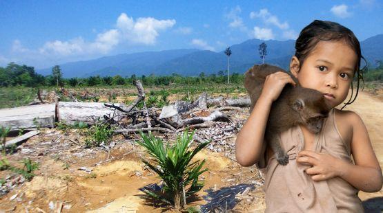 Palawan: Palmöl nimmt uns unsere Heimat. Auf den Philippinen sollen acht Millionen Hektar Land in Palmöl-Plantagen umgewandelt werden. Einwohner verlieren ihre Heimat, der Regenwald stirbt. https://www.regenwald.org/aktion/973#md=social&cn=petition-973&ct=de&sr=pinterest
