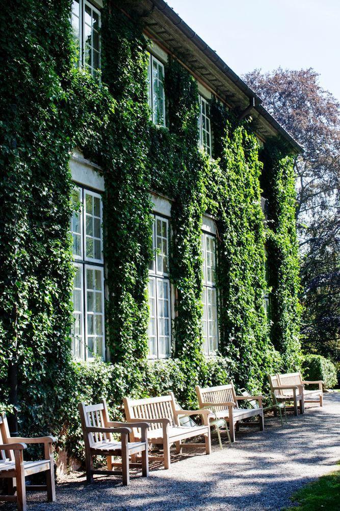 Ivy walls | MaisonMiruLoves