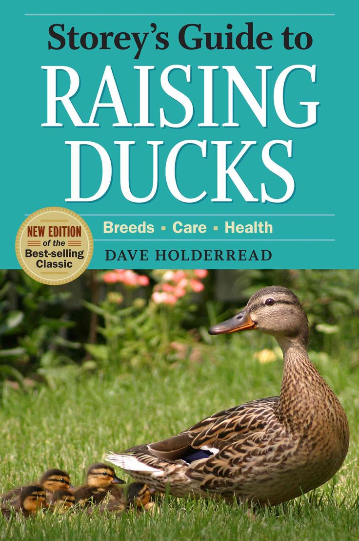 best 25 raising ducks ideas on pinterest duck coop pet ducks