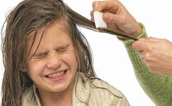 Como acabar com Piolho - Funciona Mesmo | Aprendiz de Cabeleireira|Blog sobre Cabelos e Beleza