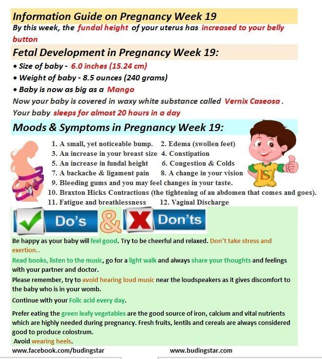 Pin On Pregnancy Week By Week