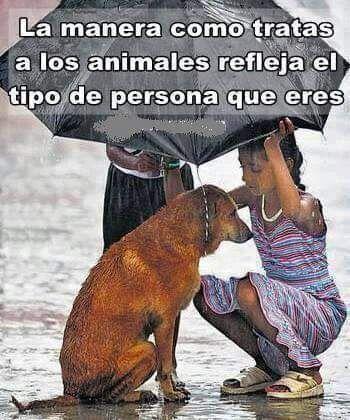 Como Educar a Mi Cachorro #animallovers #pets #animals #perros #mascotas