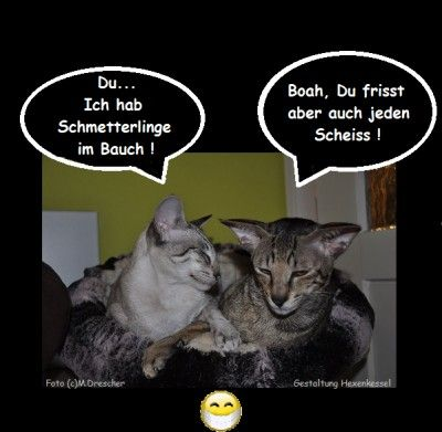 Genial ICH LACH MICH SCHLAPP Funny Cats Funny Animals