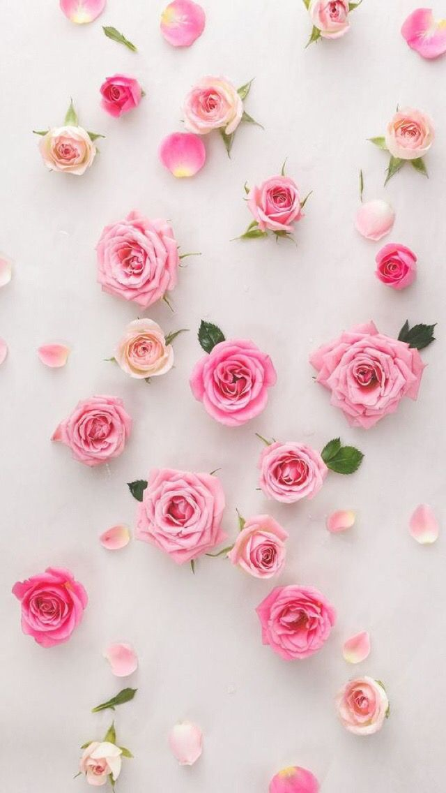 Wallpaper iPhone /pink flowers /beautiful roses ⚪️
