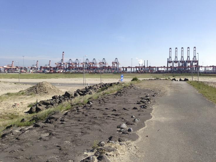 A lot of harbor cranes at the 2nd Maasvlakte