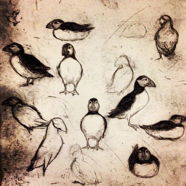 John Olsen, Færøerne, 1978. #fynsgv #johnolsen #birds #odense www.thisisodense.dk/3042/john-olsen-iagttagelser