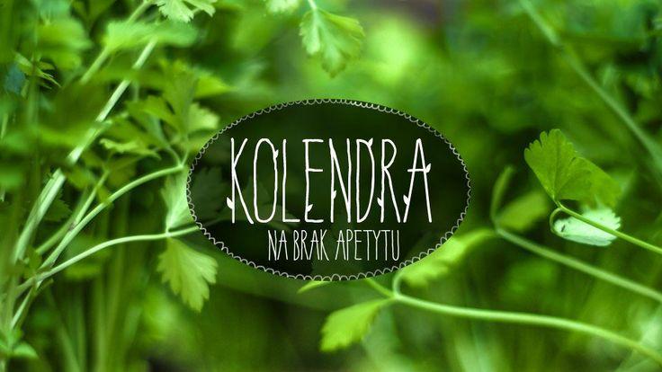 Kolendra #lidl #ryneczeklidla #ziola #kolendra