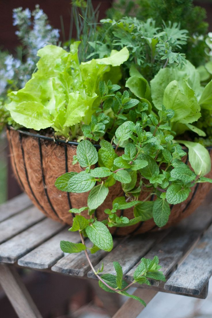 Edible Planter Basket Full Of Herbs And Lettuces