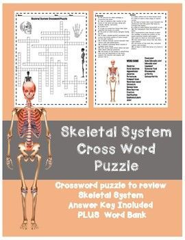 Skeletal System HS Crossword Puzzle This is a crossword puzzle that is   easy to use as a homework assignment, warm-up or for test review. This   product comes with student sheets and answer sheets. Vocabulary   includes: Skeleton Axial skeleton Appendicular