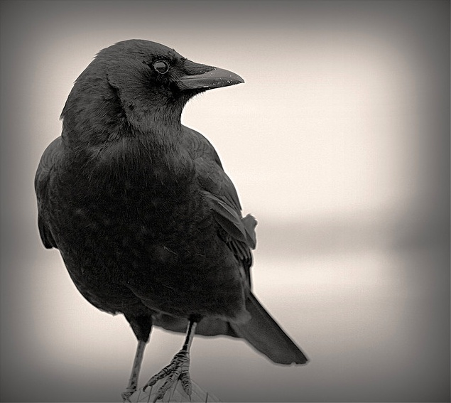 CROW: One is for bad news, two is for mirth. Three is a wedding, four for a birth. Five is for riches, six is a thief, Seven a journey, eight is for grief. Nine is a secret, ten is for sorrow, Eleven is love and twelve is joy on the morrow.     Read more: http://wiki.answers.com/Q/What_does_the_Symbolism_of_a_crow_mean#ixzz1zJ6XAAi6
