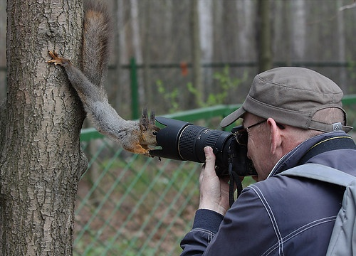 what a model.: Picture, Squirrels, Nut, Funny Stuff, Ridiculous Photogen, Close Up, Closeup, Cameras, Animal