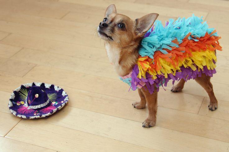 Easy DIY Dog Pinata Costume