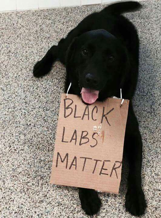 Black Labs matter. These dogs have my heart