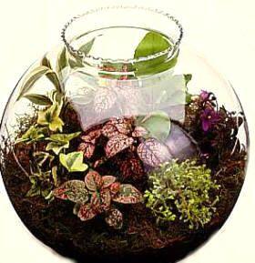 Pequeño jardín dentro de una pecera redonda