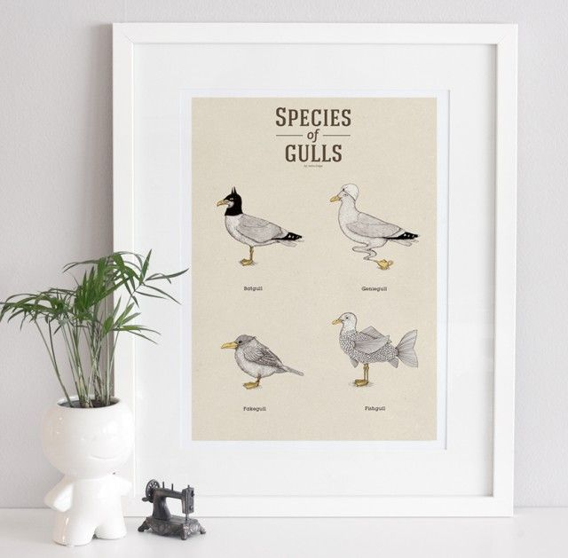 Species of Gulls vol. 2 - poster by A Grape Design #nordicdesigncollective #agrapedesign #speciesofseagulls #seagull #seagulls #bird #ocean #sea #westcoast #eastcoast #archipelago #batgull #batman #geniegull #genie #fake #fakegull #fish #fishgull #poster #print #paper