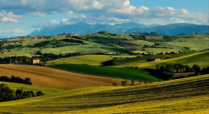 The beautiful green hills of The Marche.  Photo by Luigi Alesi.