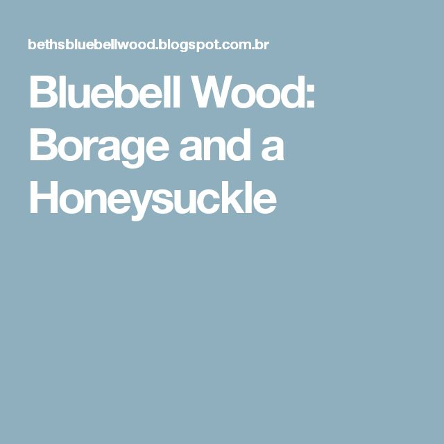 Bluebell Wood: Borage and a Honeysuckle