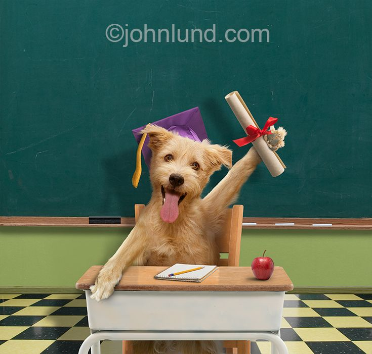 34 best funny animal photos for humorous greeting cards images on funny picture of a dog in a classroom holding up a diploma and wearing a graduation m4hsunfo