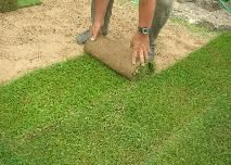 Gazon en rouleau - gazon en rouleau-pelouse en plaque-prix du gazon en rouleau