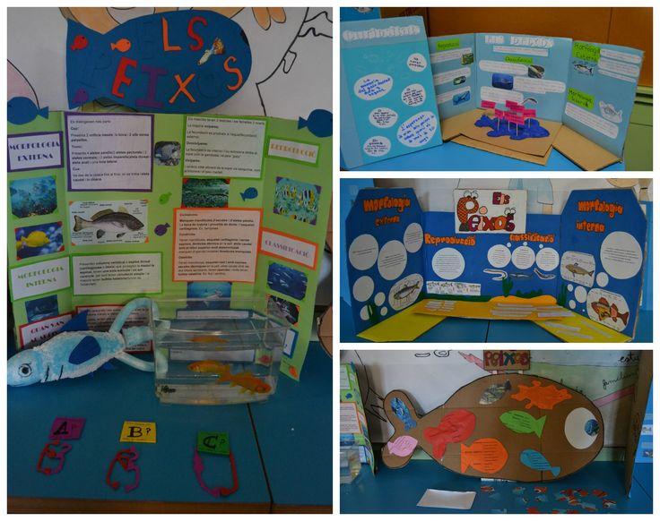 Science fair project. Expositors sobre els peixos. Treball de síntesi 1r d'ESO. Salesians de Sabadell.