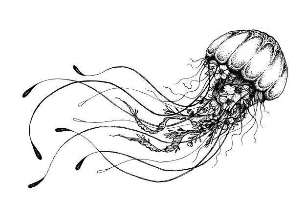 Pin Von Hyggy Draws Auf Jellyfish Kunstproduktion Seepferdchen Zeichnung Hand Illustration