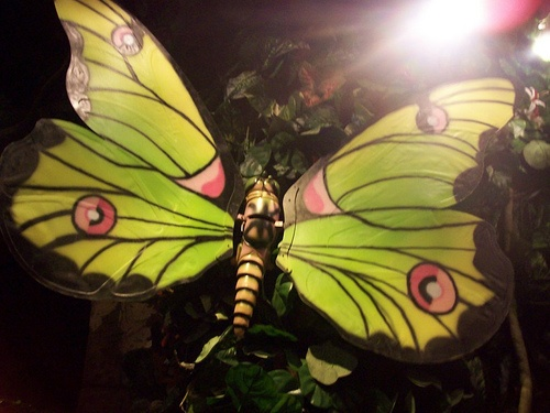 London August 2008 - Rainforest Cafe Butterfly by molly bruton, via Flickr