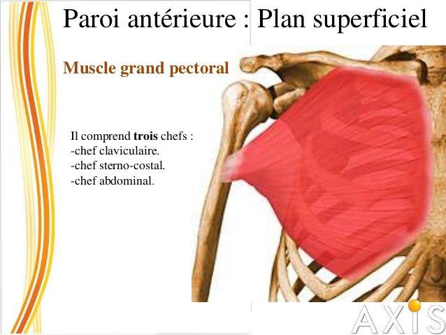 Paroi antérieure : Plan superficiel Muscle grand pectoral Chef Claviculaire : s'insère sur la moitié médiale du bord antér...