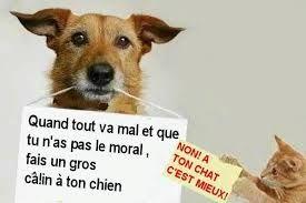"""Résultat de recherche d'images pour """"citation humour education chien"""""""
