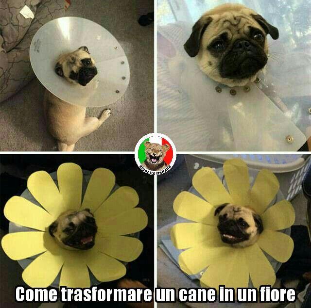http://www.vignetteitaliane.it #vignette #immagini #divertenti #italiano #lol #funny #pictures #italian #cani #dogs