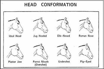 Horse Face Markings Worksheet Horses Lovers Horse Leg Markings