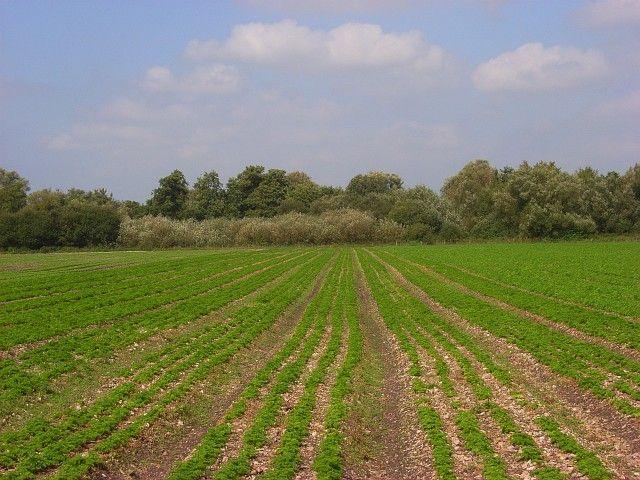 Wyjazd z dala od wszystkich przyda się każdemu - na wsi odpoczniemy na pewno - http://imcuk.org/?p=16